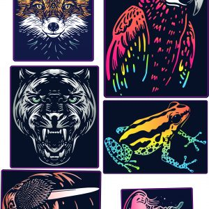 Collection animaux color